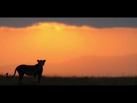 Morning sounds of the Masai Mara in Kenya