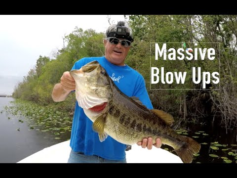 Shiner Fishing For Trophy Bass On The Ocklawaha River (Round II)