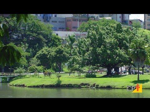 Clique e veja o vídeo Curso Arborização Urbana