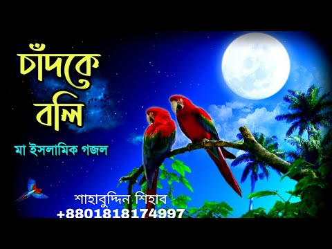 Ami Chad Ke Boli Tumi Sundor Nou  আমি চাঁদকে বলি  Shahabuddin Shihab  Official Video Song