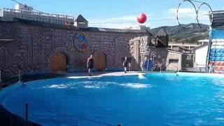 Адлер  Шоу дельфинов   1