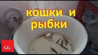 кошки и рыбки