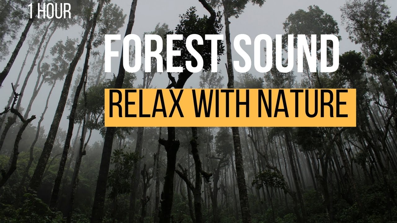 Nature Sounds: Amazon , Rainforest Sounds: Birds ans insects sounds : For Relaxation ,Sleep ,Focus