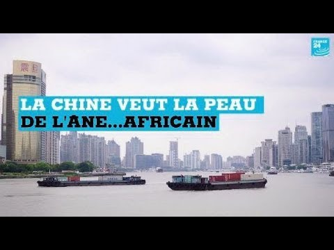 La Chine veut la peau de l'âne...africain