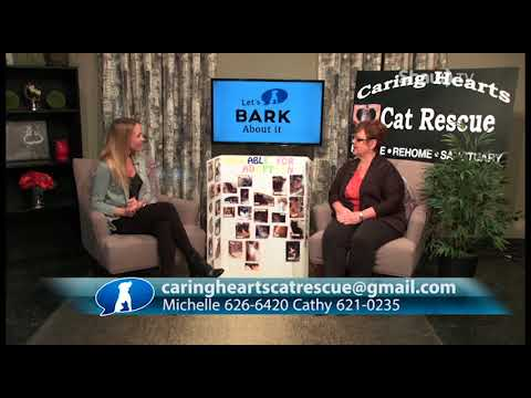 Let's Bark About It - Caring Hearts Cat Rescue (Part 3)