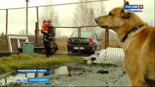 Юный житель Новосибирской области защитил младшего брата от собаки