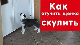 Как отучить щенка СКУЛИТЬ, когда он остается один дома