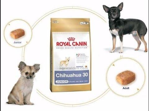 Pienso De Royal Canin Para Perros De Raza Chihuahua Youtube