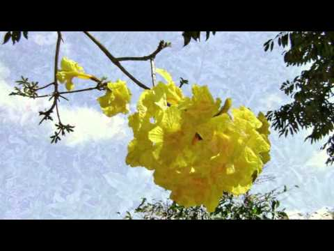 ROBERTO CARLOS (MENSAGENS) - FLORES NA NATUREZA