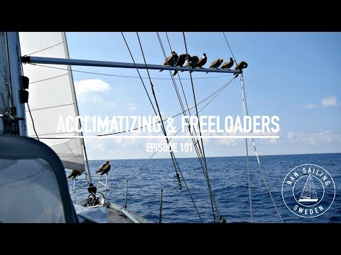 Sailing 4100 Nm To Hawaii - Acclimitizing & Freeloaders - Ep. 101 RAN Sailing