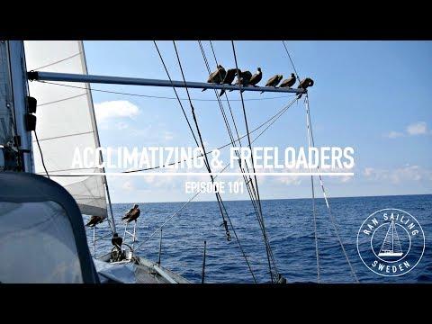 Sailing 4100 Nm To Hawaii - Acclimatizing & Freeloaders - Ep. 101 RAN Sailing