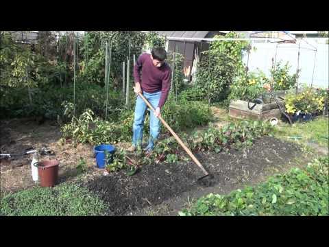 Посев сидератов. Осенняя