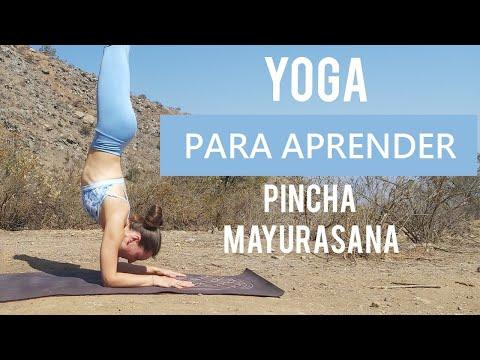 YOGA PARA PRINCIPIANTES - Pincha Mayurasana   Clase completa de vinyasa yoga   MalovaElena