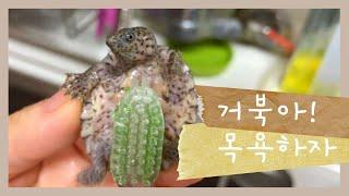 [ 거북이의 일기 ] #02 거북아, 목욕하자! │ T…