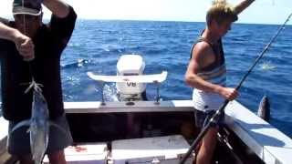 Fishing for Skipjack and Albacore Tuna