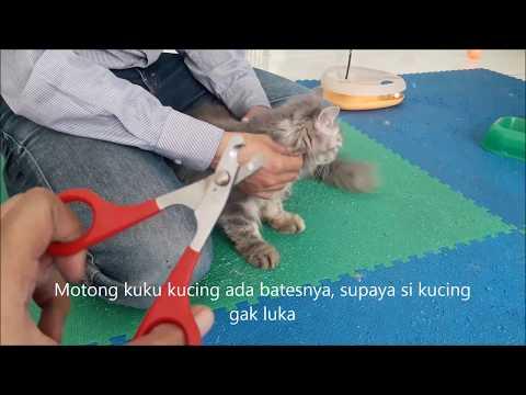Cara Membersihkan Poop Kucing Di Kotak Pasir Doovi