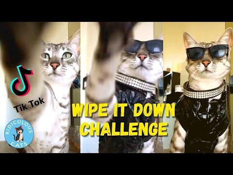 Cute cats wipe it down tiktok challenge