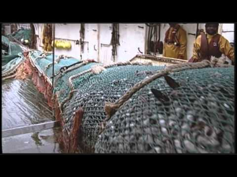 State Of The Planet's Oceans: Decimation Of The Atlantic Cod Fishery