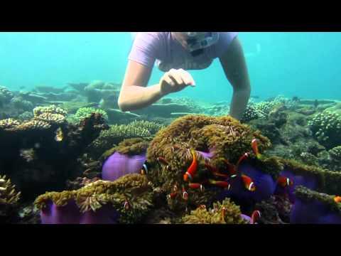 Welcome To Nemoland - Maldives