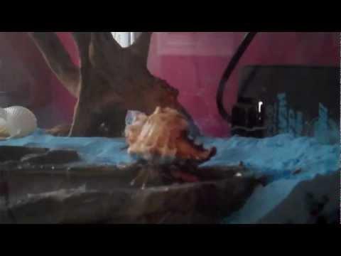 40 Minutes of A Crab
