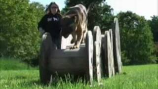The German Shepherd Dog- Remember The Name