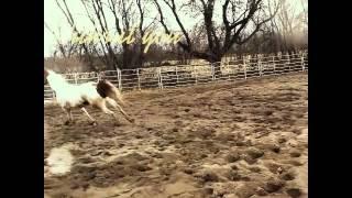 Il est plus qu'un cheval
