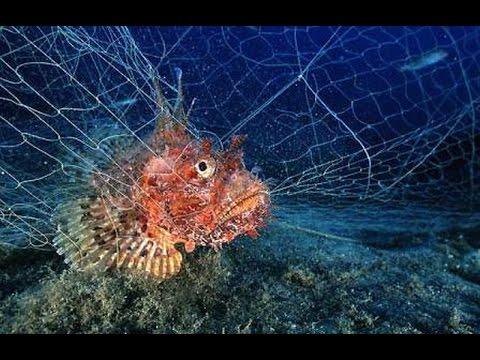 Pesca sub rete da posta a santa marinella distanza 50 - Rete da pesca per decorazioni ...