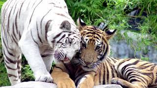 Кошки, котики, котята, cats, cat #2 (#кошки #котики #котята #cats #cat)