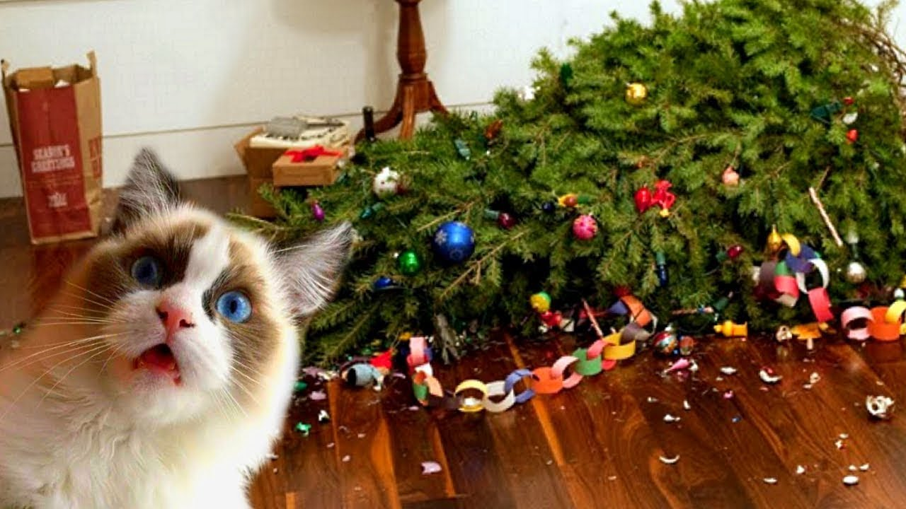 Funny Cats Love Christmas Trees Compilation NEW