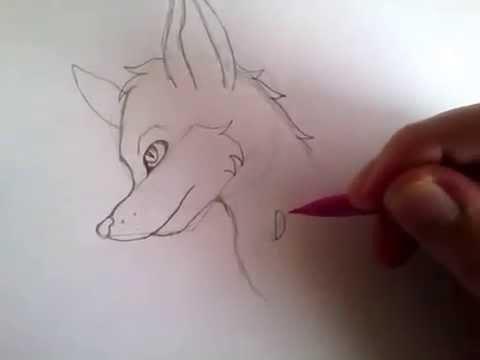Comment Dessiner Un Loup Style Manga Etape 1 Youtube