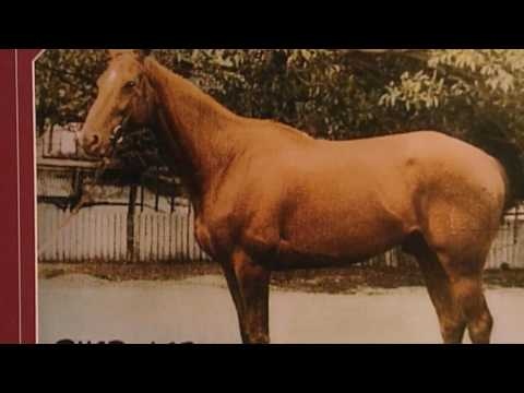 The Mysterious Death The World's Greatest Racehorse Phar Lap from YouTube · Duration:  5 minutes 58 seconds