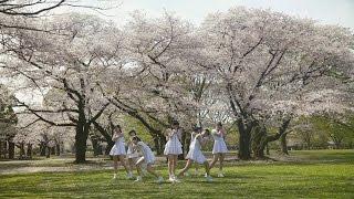 『桜前線北上プロジェクト』番外編の「咲き誇りVer.」。咲き誇る桜の下...