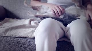 Уход и содержание щенка и чихуахуа | Чихуахуа Софи
