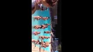 Zumba dans la piscine du Camping Saumont