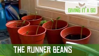 The Runner Beans (Part 9)
