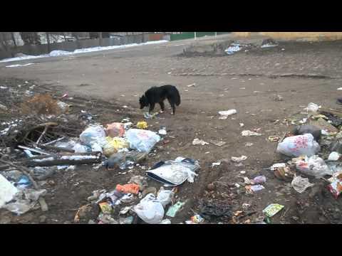 19.03.16 год г Семилуки- город сказка.