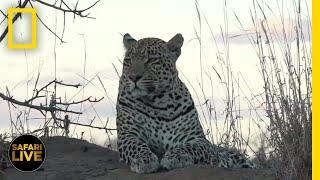Safari Live - Day 368 | National Geographic