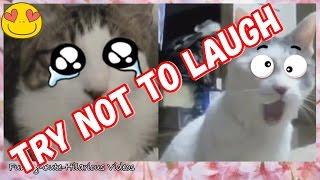 「笑える動画集」 絶対笑う、おもしろ猫、可愛い癒しネコちゃん! - Fun...