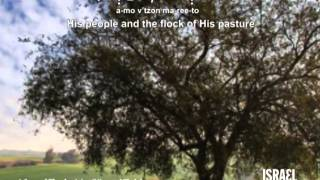 Song of Thanksgiving (Mizmor l