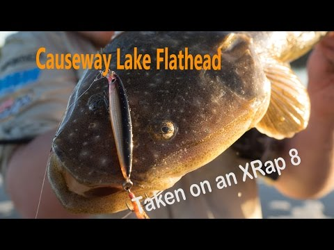 Causeway Lake Flathead Realease And Pictures - Fishing Yeppoon, Central Queensland