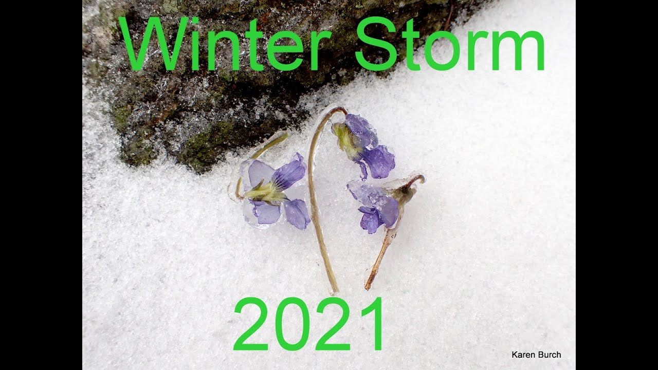 Download February 15th Ice Storm Frozen plant covers frozen flower pictures snow storm 2021 louisiana
