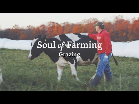 Soul of Farming | Grazing | Organic Valley