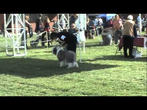 Download Snoopy's first dog show - Napa 2010