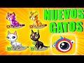 🔴Coin cat Nuevos gatos en clipclaps😻Coin cat gato nivel 37 | CLIPCLAPS APP PARA GANAR DINERO 2020