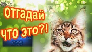 загадки от кота вота 3