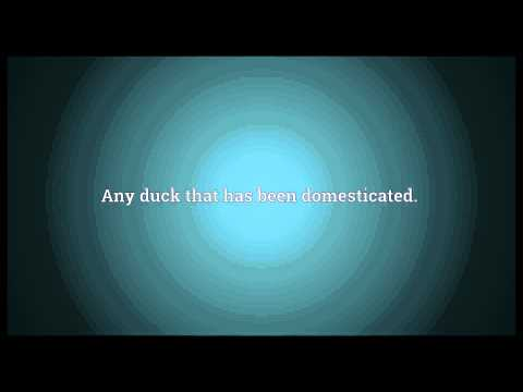 Domestic duck Meaning