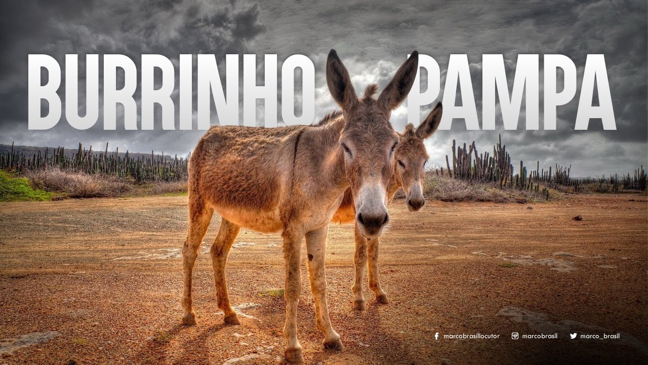 poema do burrinho pampa