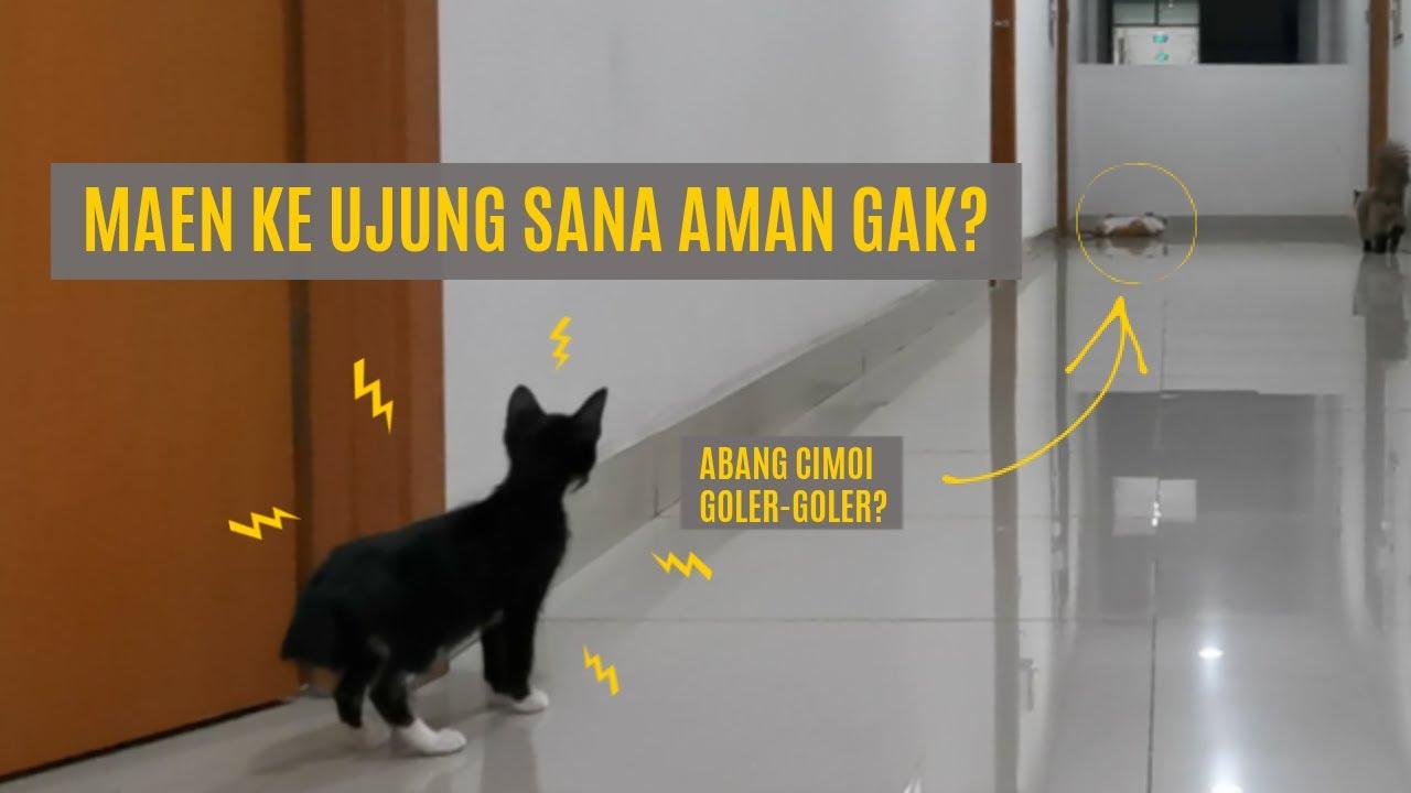 Bayi Kucing Pertama Melangkah Keluar Rumah