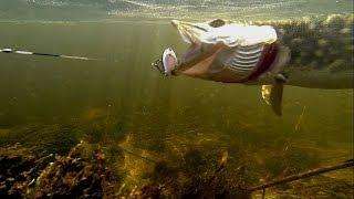 Fishing: 10 pike with DUO Flatside bass lure Рыбалка: 10 щук на 1 воблер Snoek muskie gädda szczupak