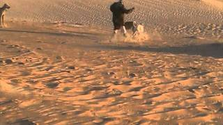 مقناص الفهادي في الرمله 1 12 1233